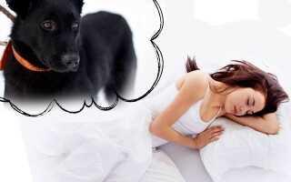 Снится собака женщине, как толковать такой сон