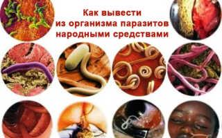 Как вывести из организма паразитов народными средствами