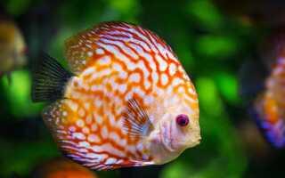 Приснилась живая рыба, как толковать такой сон!