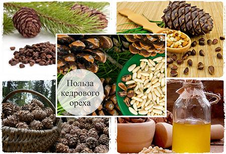 Кедровые орехи, польза и вред для мужчин, жен