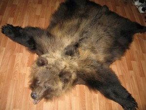 к чему снится медведь женщине незамужней